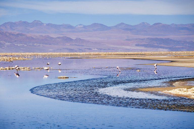 Laguna Cejar, Ojos del Salar y Tebenquinche